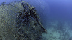 Large school of fish, world war 2 shipwreck - SS Thistlegorm - HD1080p 25fps - stock footage
