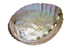 Stock Photo of abalone shell inside