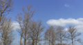 Trees and  blue sky with clouds. Time lapse landscape Footage