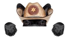 cowboy dog - stock photo