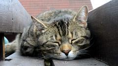 Happy sleepy cat Stock Footage