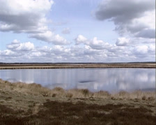 DWINGELDERVELD  Fen in moorland + pan. Drenthe heath sheep at horizon. Stock Footage