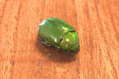 dead green beetle on wood - stock photo