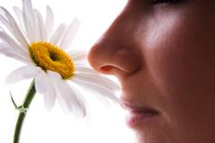 girl smelling camomile isolated on white - stock photo