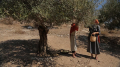 Women Picking Olives in Nazareth Village Stock Footage