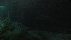 Beautiful algae in wellspring Stock Footage