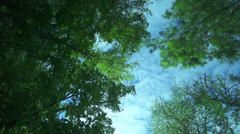 The crown of the trees in the background clouds and sky Stock Footage