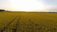 Aerial view of a huge oilseed rape field Stock Footage