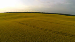 Flying over an oilseed rape field at sunset Stock Footage