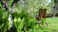 Stock Video Footage of Empty wooden chair fern plant leaves and blooming apple tree
