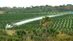 Stock Video Footage of Coffee Plantation