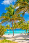 coconut palm trees  on a sunny day at a cuban beach - stock photo
