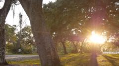 sunset through trees - stock footage