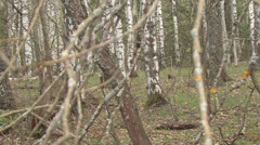 In spring forest Stock Footage