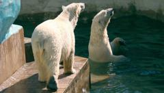 Two polar bears at the Zoo Stock Footage