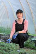 agricultural worker in a greenhouse with tomato plant - stock photo