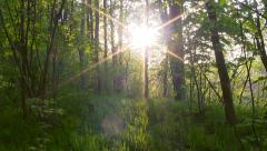 Forest sunset timelapse. Stock Footage