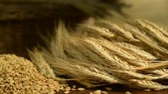 Detail of barley, taken in studio,rotation of barley, panning Stock Footage