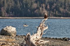 eagle with fisherman - stock photo
