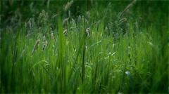 Green grass, nature of East Ukraine. Stock Footage