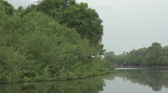 037 Pantanal, boating on the river, Cocoi Heron flies in slowmotion Stock Footage
