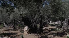 Nazareth Village Museum in Israel Stock Footage