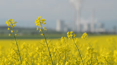 Field of rape with the power station Pocerady, rack focus,shallow depth of field Stock Footage