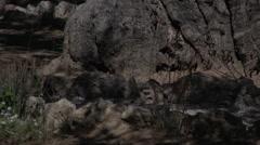 Tree in Gethsemane Stock Footage