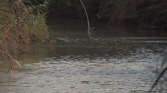 Jordan River Israel Stock Footage