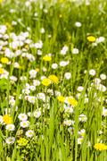 Dreamy meadow Stock Photos