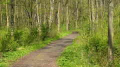 forest in the springtime,zoom in,locked down - stock footage