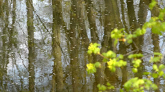 Still creek in the springtime,rack focus,locked down Stock Footage