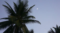 Tops of coconut trees against the evening sky and tropical moon. Stock Footage