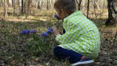 Little boy picking up spring flowers in the forest Stock Footage
