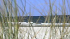 Coastline of the Baltic sea in Poland with beachgrass Stock Footage