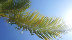 Palm leafs in the wind Stock Footage