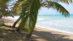 Natural caribbean bay with palm tree Stock Footage