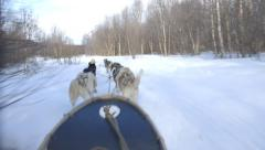Dog Sledding Snow POV Action Adventure Winter Sport - stock footage