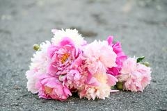 Bouquet of beautiful peonies on a road Stock Photos