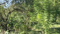 Caribbean landscape Stock Footage