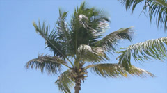Tropical tree Stock Footage