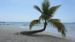 Perfect caribbean beach with perfect palm tree Stock Footage