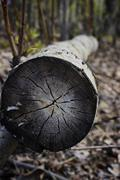 Tree Rings - stock photo
