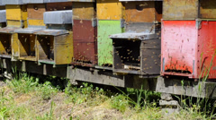 Bees at work in the hive Stock Footage