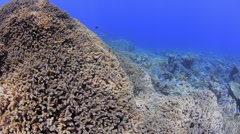 POV - Swimming over tropical coral reef - 25fps Stock Footage