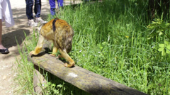 Cute little monkey at the zoo Stock Footage