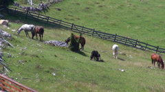 Seven horses in corral, meadow, pasture, herd of domestic animals, farm, stable - stock footage