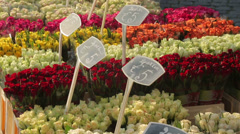 Tulips for sale in euro at flower market in spring Stock Footage