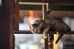 striped cat sleeping or dreaming - stock photo