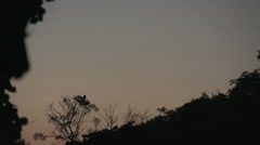 050 Pantanal, sunset, macaw (Ara chloropterus) couple in tree Stock Footage